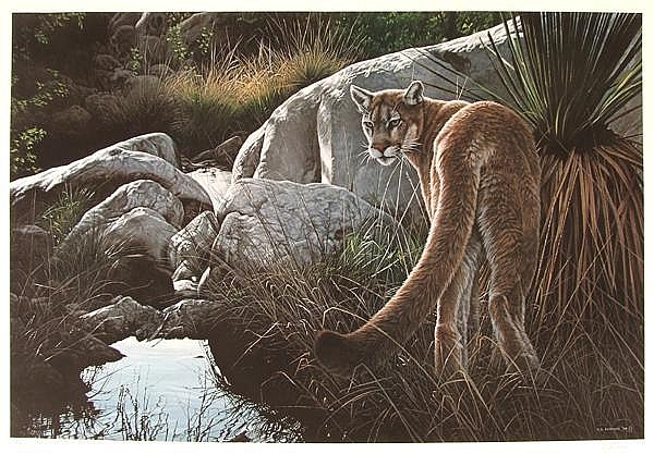 RON S. PARKER (American 1942- ) 'Creekside - Cougar', color lithograph, pencil signed and numbered 77/950. Unframed in original portfolio from Mill Pond Press. Condition: no visible defects. Dimensions: 20