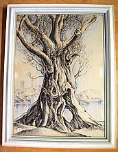 Robert Emerson Curtis drawing of Moreton Bay fig