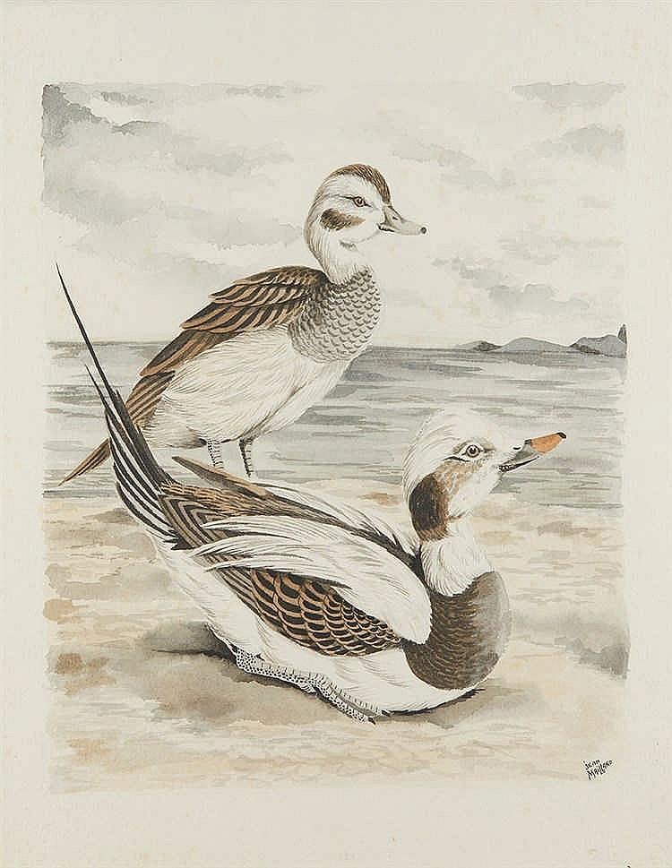 Jean MAILLARD (1901-1993) Hareldes de Miquelon. Lithographie. Dim. (à