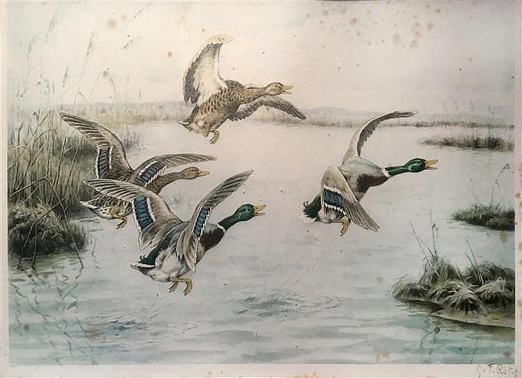 Georges Frédéric RÖTIG (1873-1961) Canards colverts. Lithographie en co
