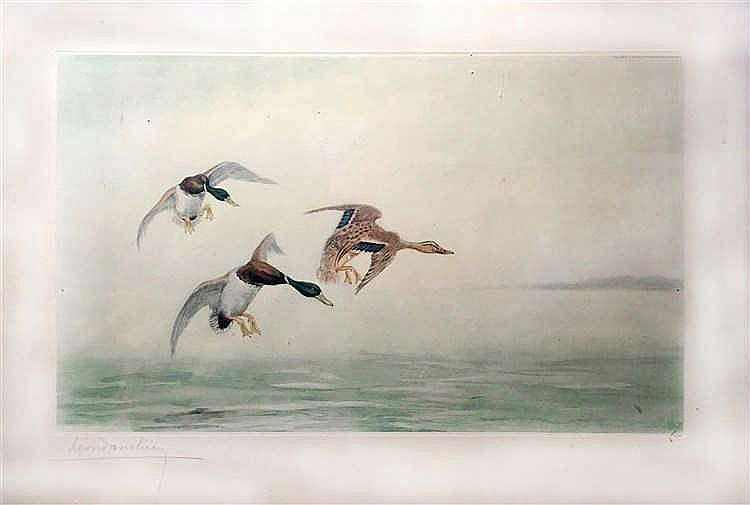 Léon DANCHIN (1887-1939)   Canards colverts.   Lithographie en couleur sig