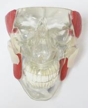 LUCITE SKULL MODEL MARKED GPI, 2006. 6 3/4 IN