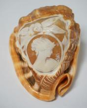 CAMEO CARVED CONCH SHELL. 4 3/4 INCHES LONG.