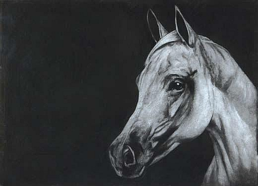 Paddy Lennon HORSE Charcoal Drawing 31.5