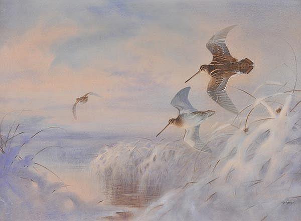 Allis (Peter 1944-). A Whisp of Snipe,