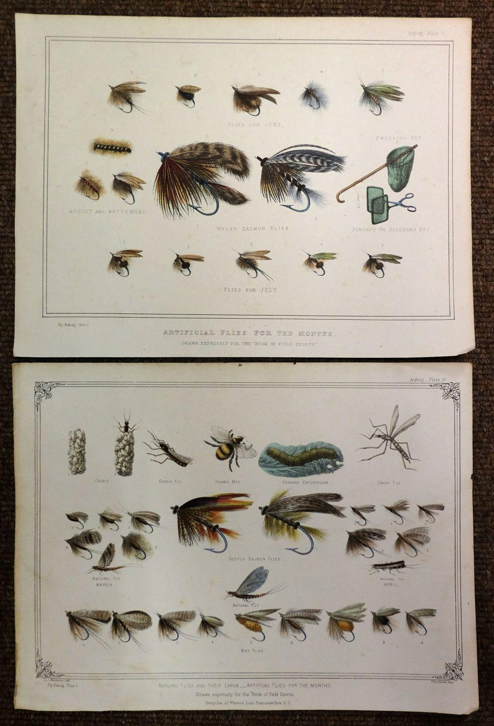 * Dogs & Natural History. A mixed collection of approximately 400 prints, 19th & 20th century