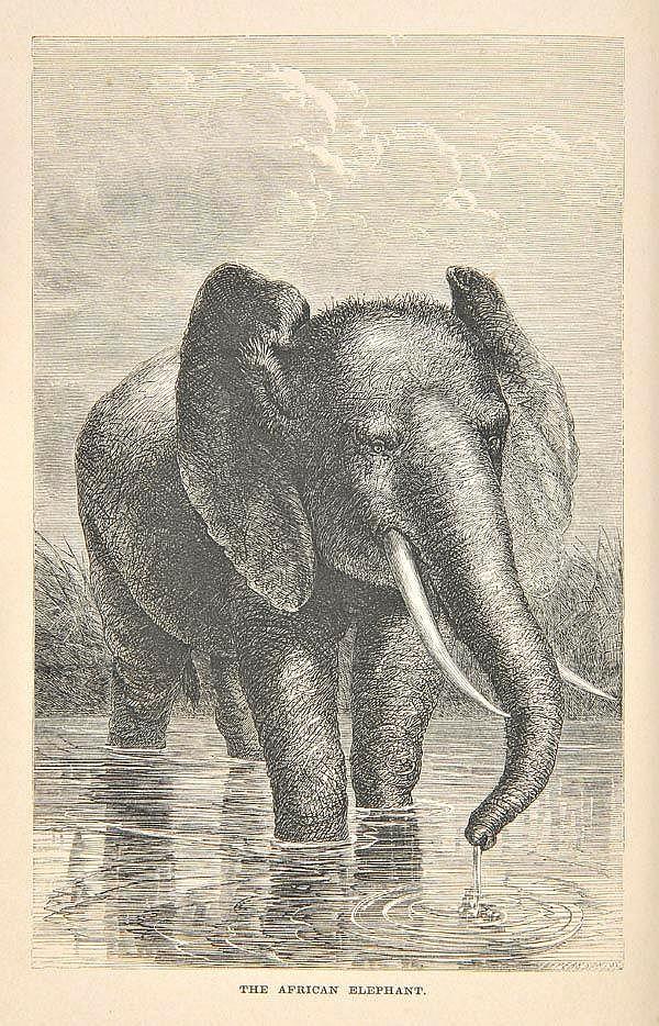 Andersson (Charles John). The Okavango River: A