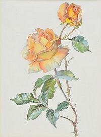 * Heather (Marjorie, 1904-1989). Study of a rose,