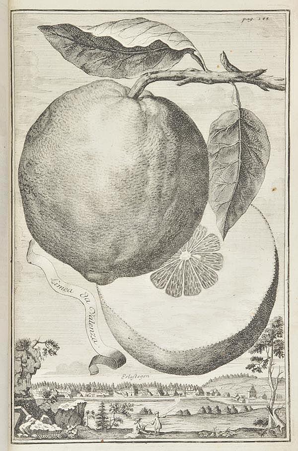 Volckamer (Johann Christoph). Nurnbergische