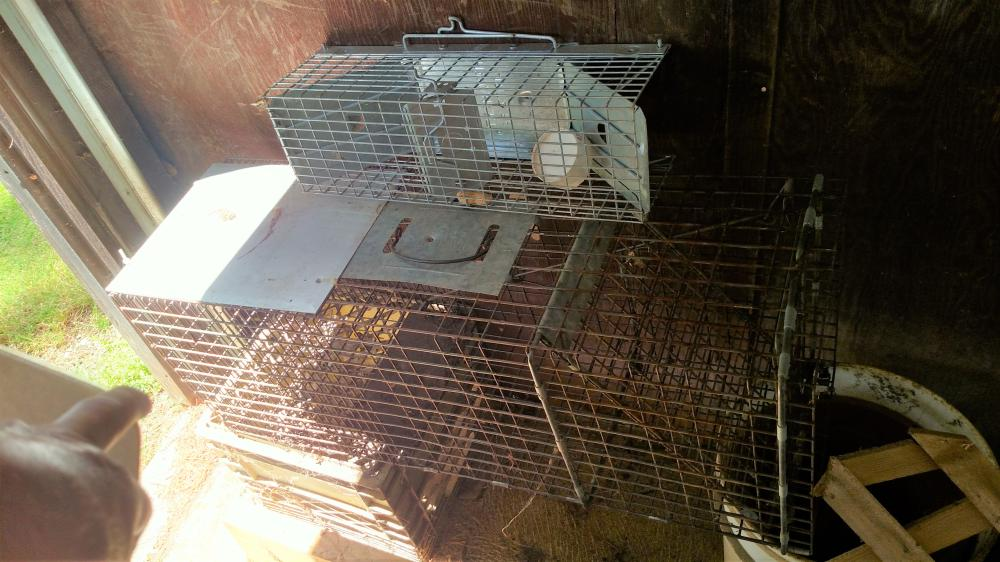 2 live traps (large and small)
