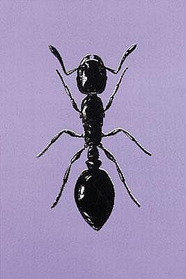 Peter Kogler * (born 1959 in Innsbruck) Ant,
