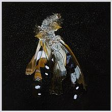 Mat Collishaw (b.1966) - Insecticide 38