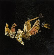 Mat Collishaw (b.1966) - Insecticide 35