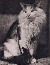 Frank Eugene (1865 - 1936) - The Cat, 1916