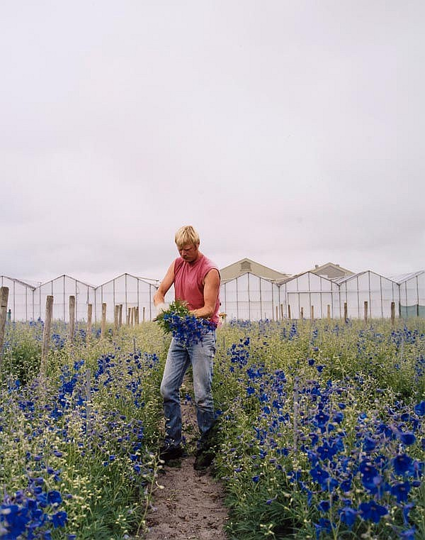 Noor Damen (b.1949). Delphinium Blue, 2000; Delphinium Rose, 2000. Two chromogenic prints, each sign