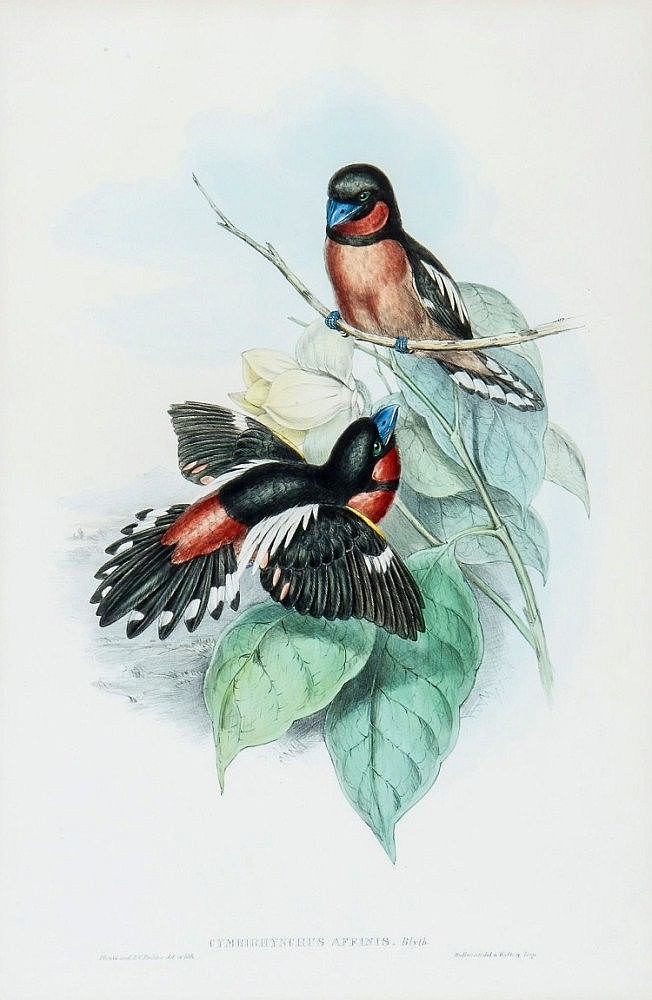 John Gould and Henry Constantine Richter - A group of 6 Birds of Asia,