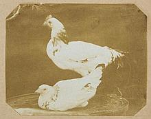 Mary Dillwyn (1816-1906) - Two Studies of Domestic Fowl, late 1840s or early 1850s
