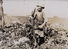 Lewis Hine (1874-1940) - Nine-year old Pauline Reiber Topping Beets Near Sterling, CO, 1915; Newsie, ca. 1912