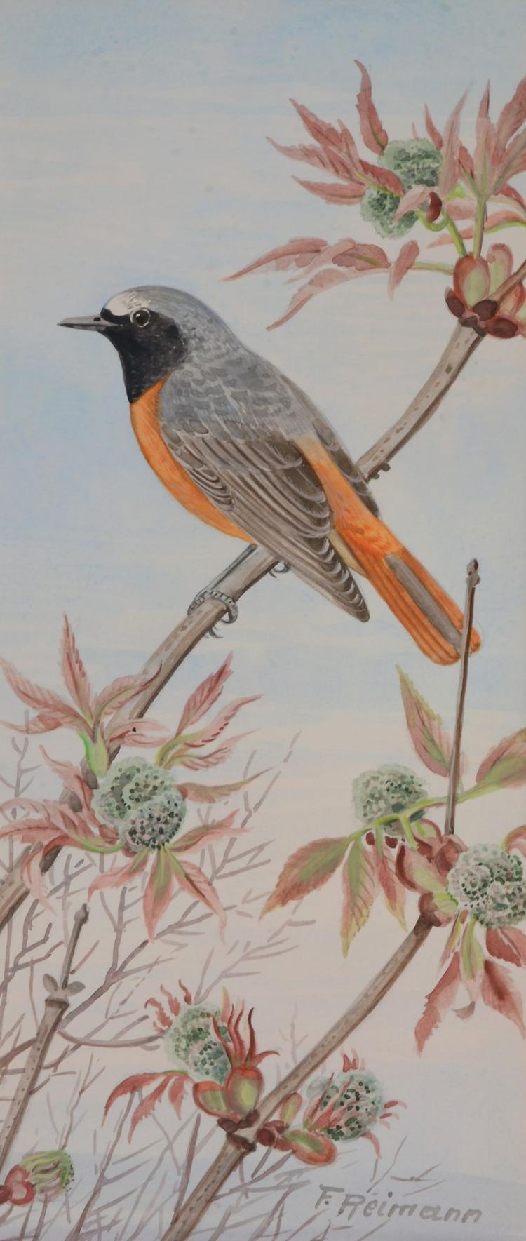 Friedrich Reimann (1896 - 1991) - Field Sparrows; Garden Redstarts; kingfisher; Kestrel; a bird of prey; an exotic bird