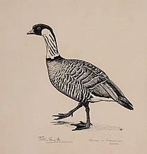 Sir Peter Markham Scott (1909-1989) - Hawaiin goose; Spotted duck and African Pygmy Geese
