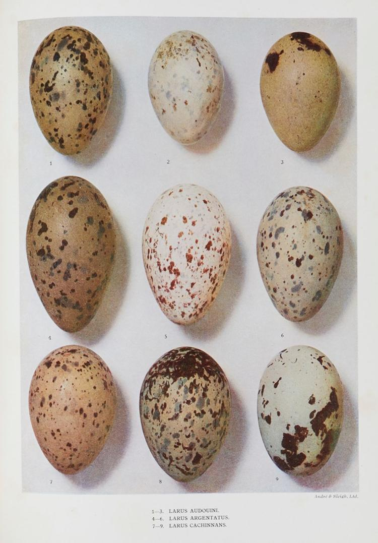 Dresser (H.E.) - Eggs of the Birds of Europe...,