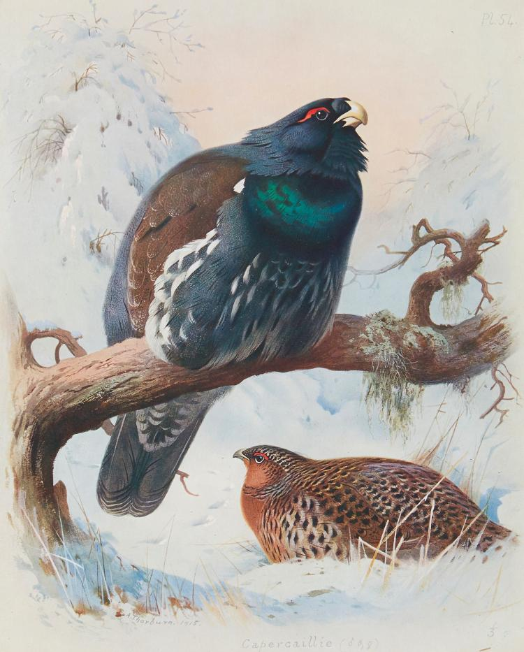 Thorburn (Archibald) - British Birds,