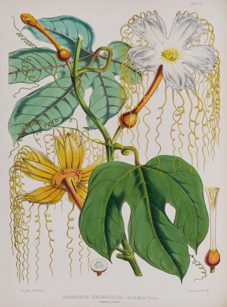 Hooker (Joseph Dalton) - Illustrations of Himalayan Plants