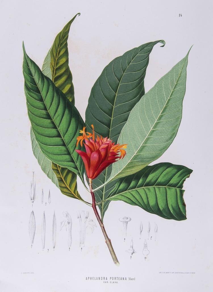 Wawra (Heinrich) - Botanische Ergebnisse der Reise Seiner Majestat Des Kaisers Von Mexico Maximilian I. nach Brasilien,