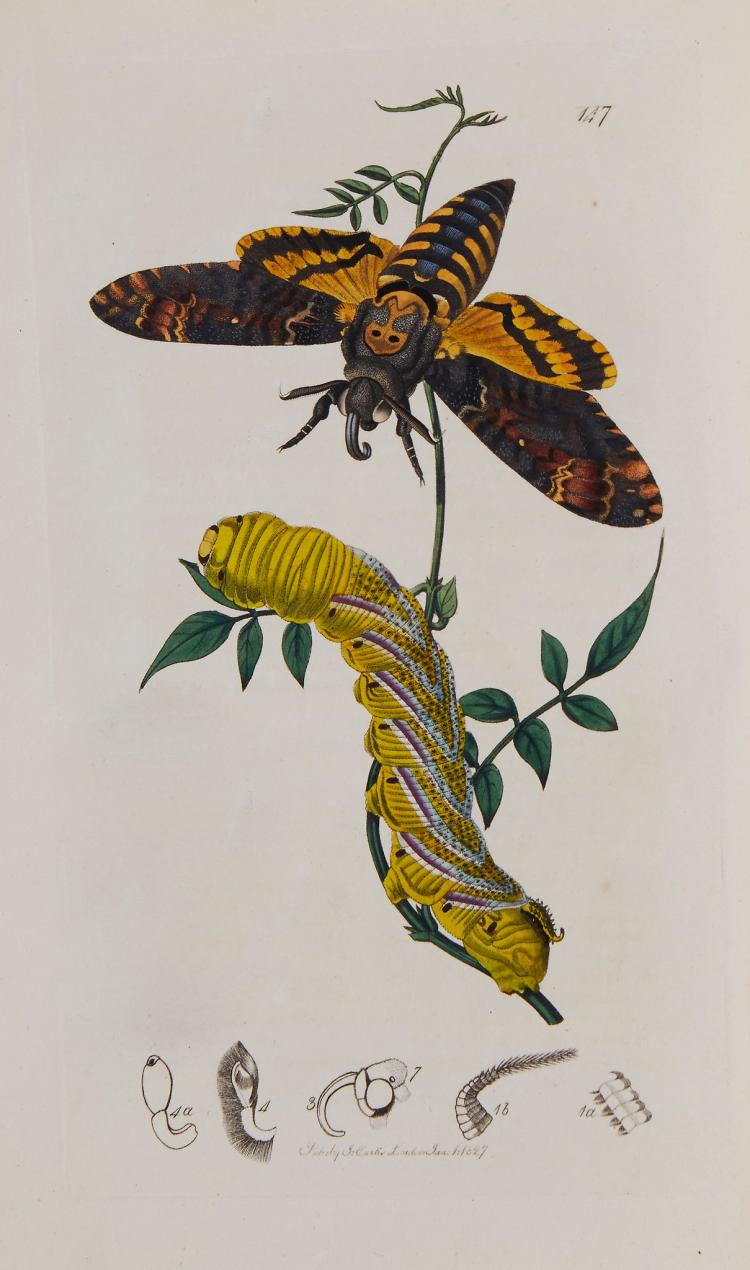 Curtis (John) - British Entomology;