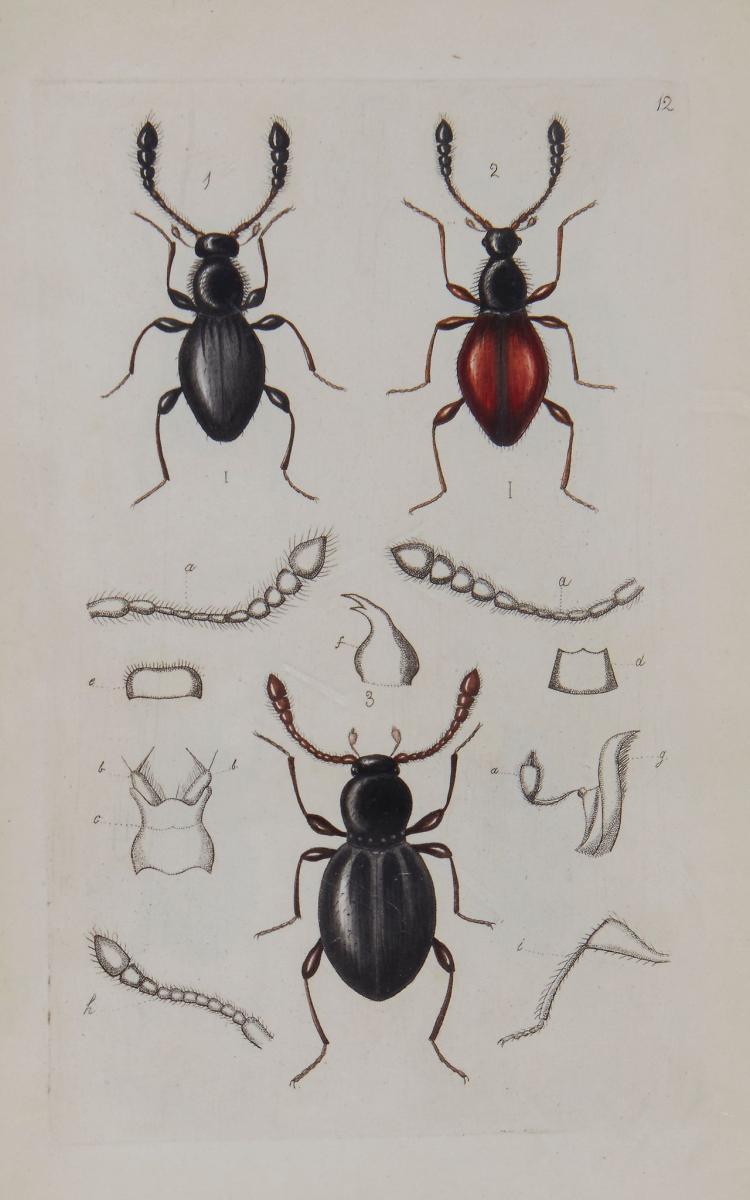 Denny (Henry) - Monographia Pselaphidarum