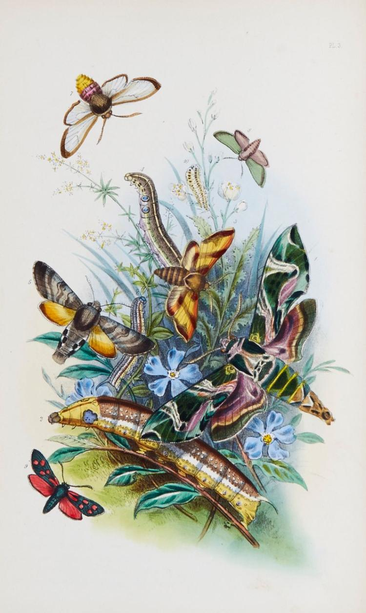 Humphreys (Henry Noel) - The Genera of British Moths,