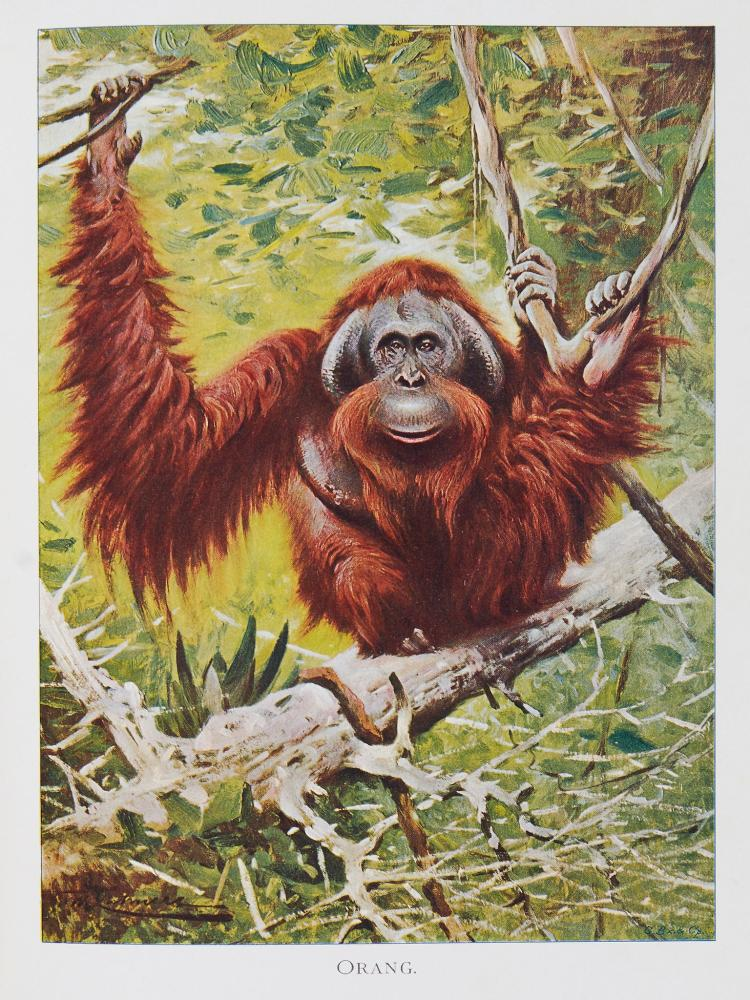 Garnett (Thomas) - Popular Lectures on Zoonomia...,
