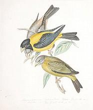 Circle of William Hayes. Ornithological studies.