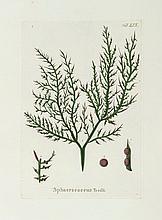 Chiaie (Stefano Delle) - Hydrophytologiae Regni Neapolitani Icones,