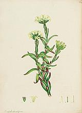Andrews (Henry) - The Botanist's Repository, for New, and Rare Plants,