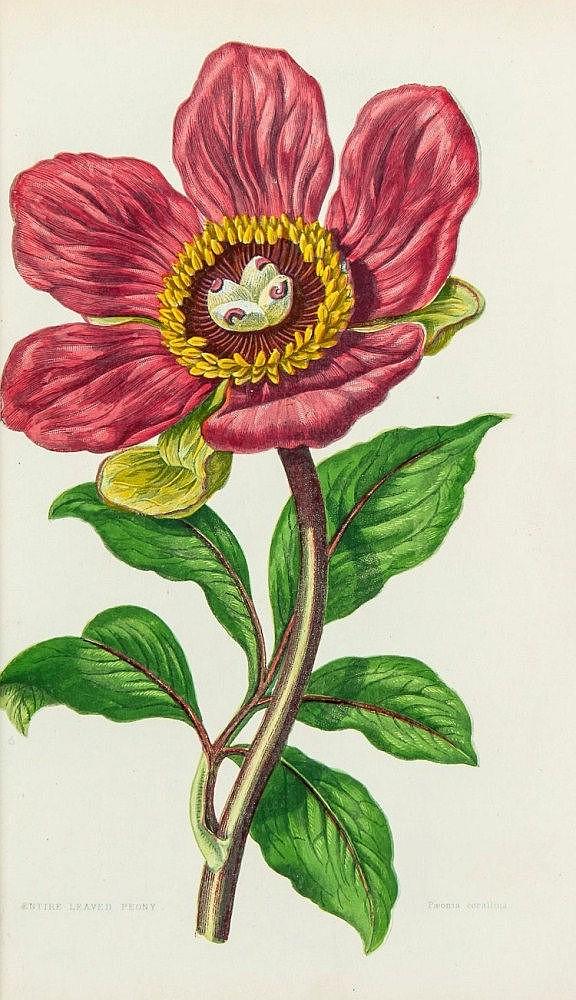 Pratt (Anne) - The Flowering Plants, Grasses, Sedges, and Ferns of Great Britain,