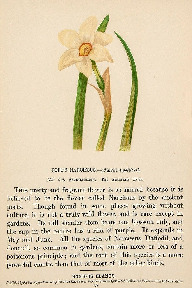 Pratt (Anne) - Poisonous, Noxious, and Suspected Plants, of Our Fields and Woods,