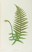 Moore (Thomas) - The Ferns of Great Britain and Ireland,