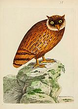 Brown (Peter) - Nouvelles Illustrations de Zoologie,