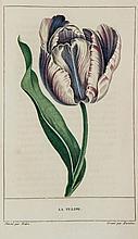 Jauffret  (Louis-Francois) - La Corbeille de Fleurs, ouvrage de botanique et de litterature ... destine aux jeunes demoiselles,