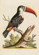 Edwards (George) - A Natural History of Uncommon Birds,