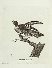 [Pennant (Thomas)] - Genera of Birds,