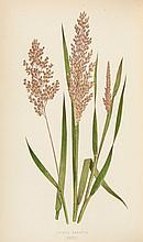 Lowe (Edward Joseph) - A Natural History of British Grasses,
