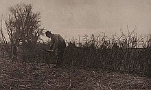Peter Henry Emerson (1856-1936). Fencing in
