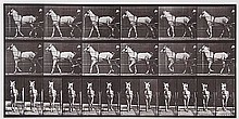 Eadweard Muybridge (1830-1904). Katydid, Walking,