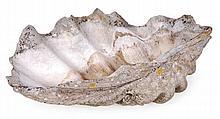 Giant clam (Tridacna gigas), a half shell, circa