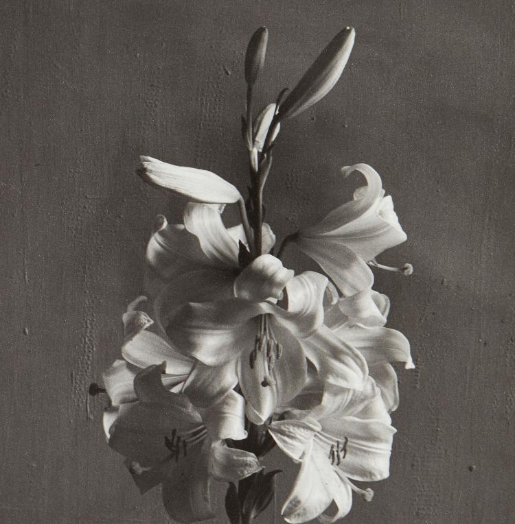 Cecil Beaton (1904-1980) - Lilies, 1930