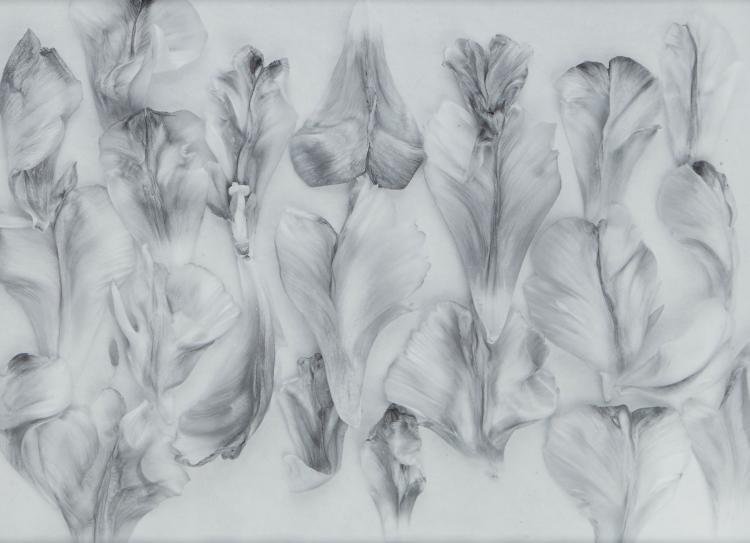 John Blakemore (b.1936) - Tulipa, Petals, 2002