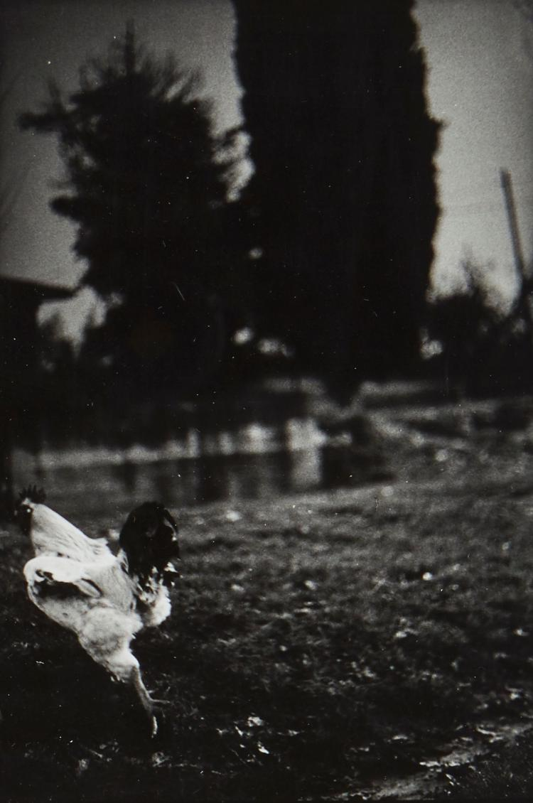 Giacomo Brunelli (b.1977) - Chicken, 2007; Horse Tail, 2007