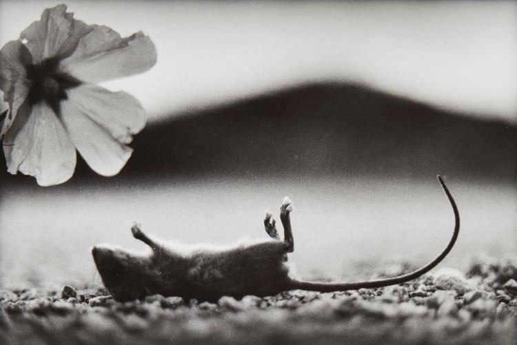 Giacomo Brunelli (b.1977) - Dog, 2008; Mouse, 2009